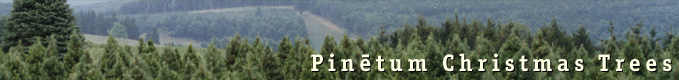 Pinetum Enterprises, Inc.